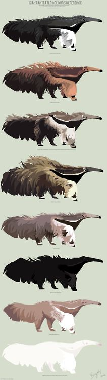 bengaly:  And now I enter in history as being the first human being in this whole world who made a reference for giant anteater colours.  Read More