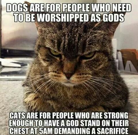 Dog people vs. cat people.