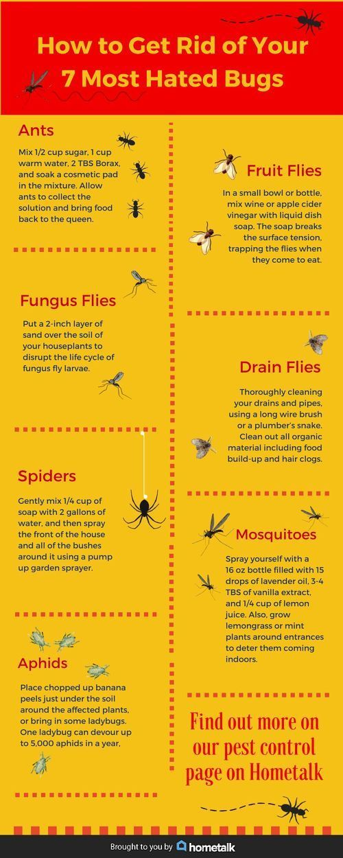 How to get rid of bugs