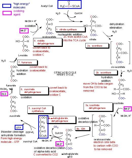 Можжевельник. Фитохимия и фармакология рода