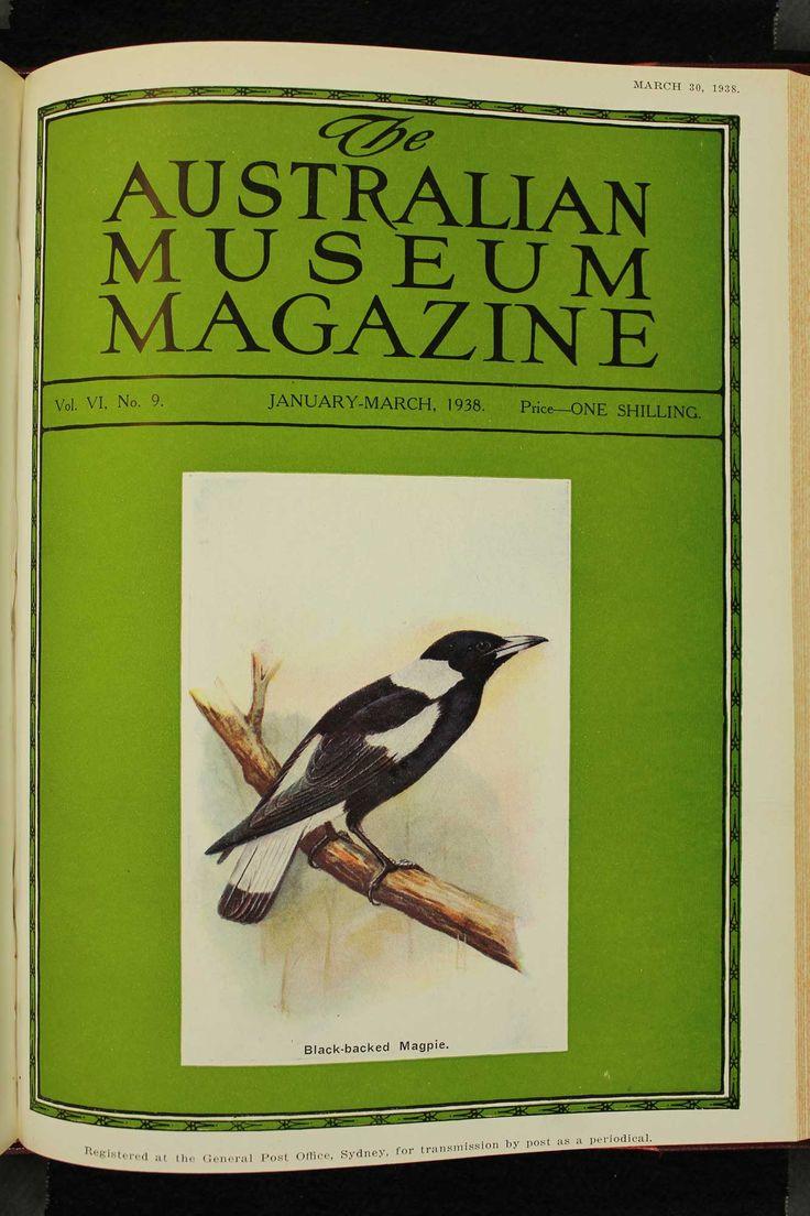 Australian-Museum-Magazine. The Black-Backed Magpie. Illustrator: Lilian Medland. http://australianmuseum.net.au/Australian-Museum-Magazine-1921-1942/