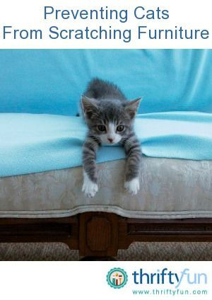 This is a guide about preventing cats from scratching furniture. Scratching is a