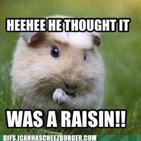 Reason #102 that children and guinea pigs don't mix well. ; )