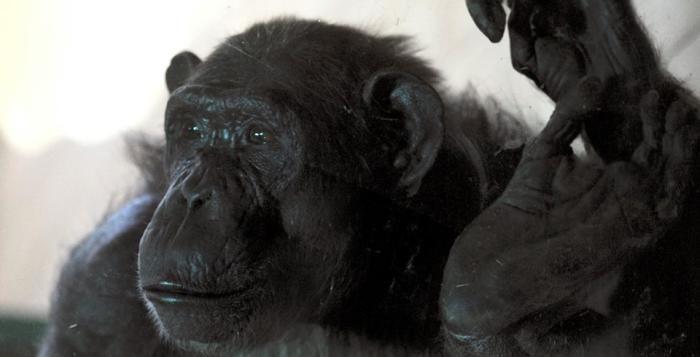 Prvním dárkem na Štědrý den může být dopolední návštěva zoo Plzeň