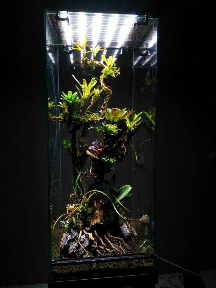 how to make a frog terrarium