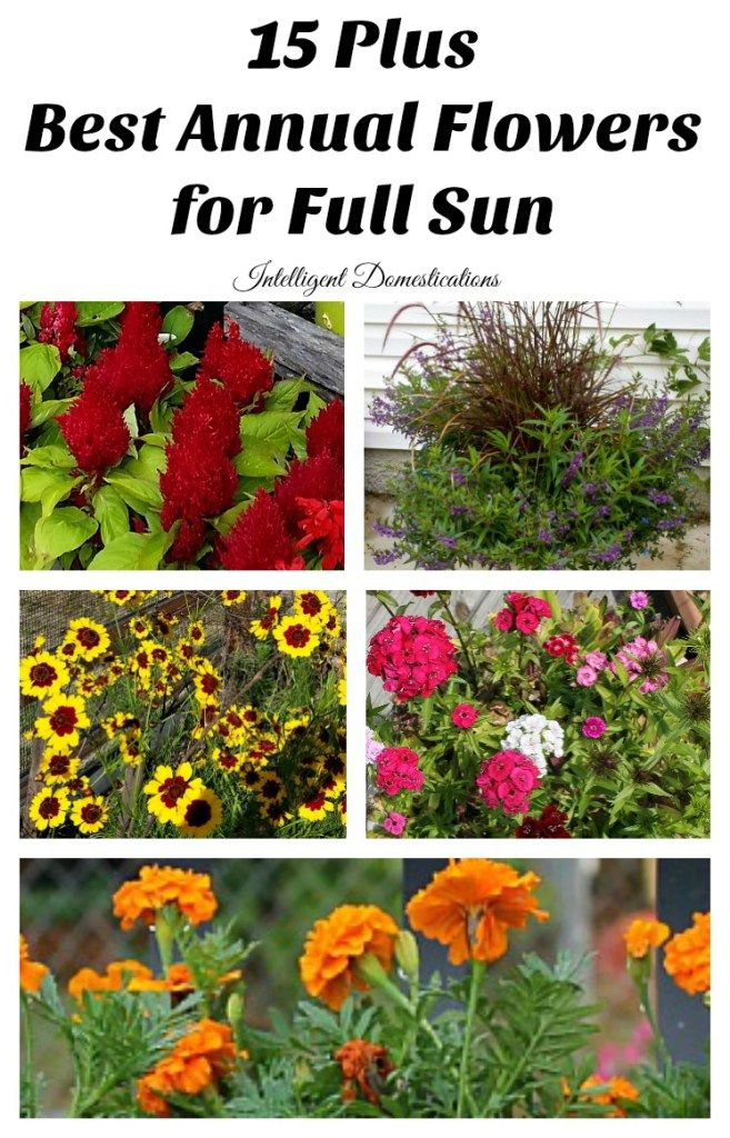 Best Annual Flowers for full sun. Best selection of annual flowers to plant in a sunny yard. Annual flowers you should plant on your sunny deck or porch. #ad