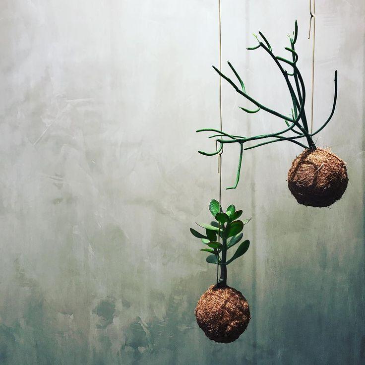 """26 Synes godt om, 1 kommentarer – Bloom (@bloom_cph) på Instagram: """"Grøn søndag, vi ses på mandag kl 11 #bloomcph #planteplaneter #greenliving #urbanjungle…"""""""