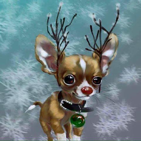 Christmas Chihuahua!