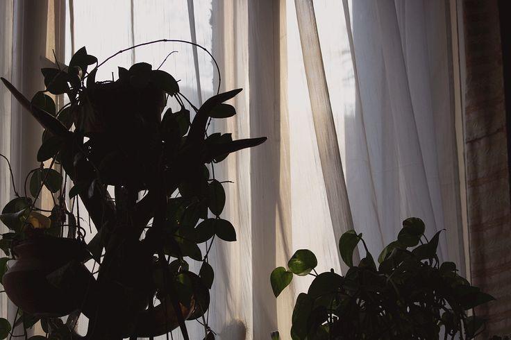 """""""Pálmafák"""" az ablaknál"""