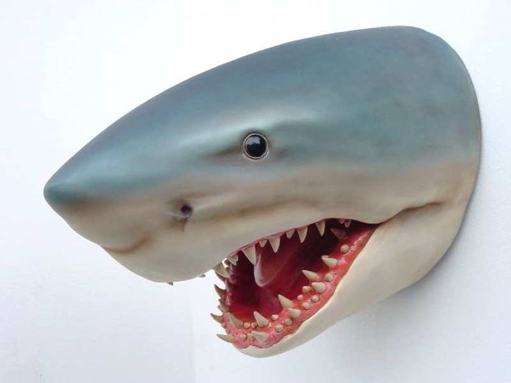 Shark Room Decor | Oh, And The Scary Shark Wall Décor (that We Are