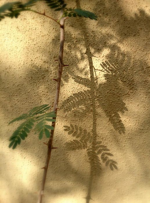 This is a photo of a branch and its shadow in the morning light.