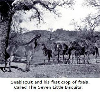 One of the greats - Seabiscuit.