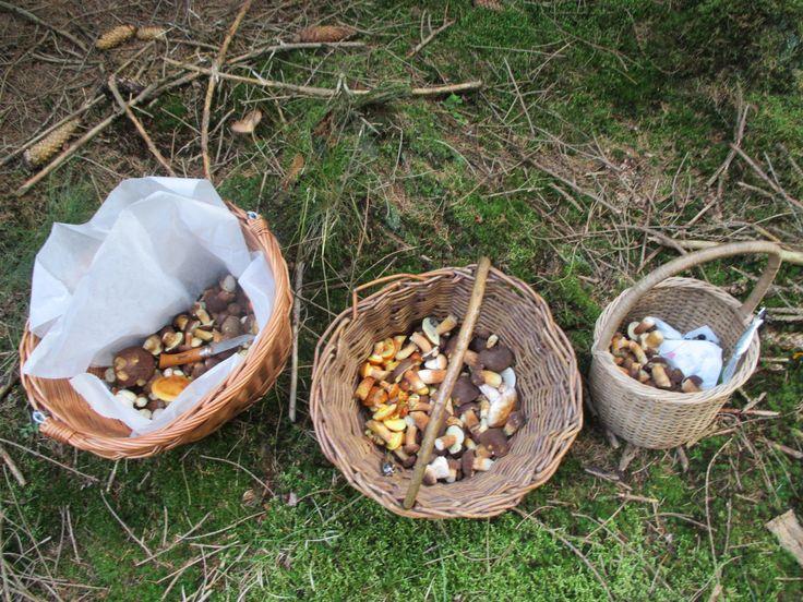 mushrooms ...3X houbová polívka...