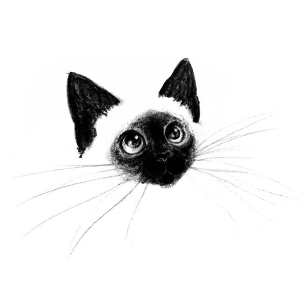 Curious Siamese Kitten by Priscilla Moore