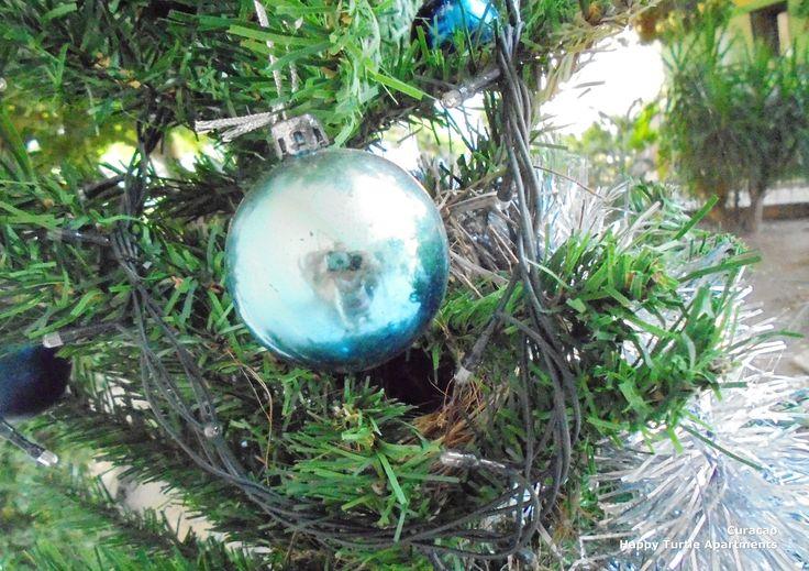 Vogelnestje in de kerstboom @ Happy Turtle, Curacao