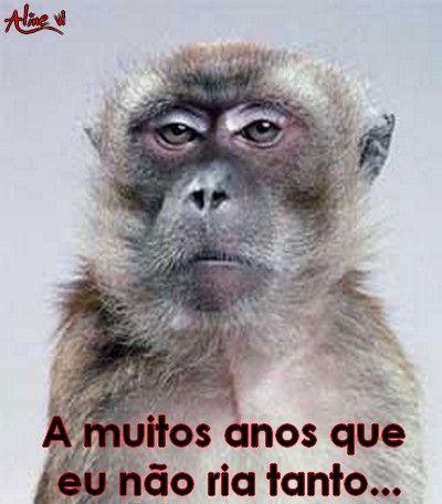 """"""" A muitos anos que eu não ria tanto... """" Rir - Macaco - Snobe - Blasé - Humor - TPM"""