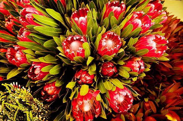 Chelsea flower show: Preparations at Chelsea Flower Show 2013