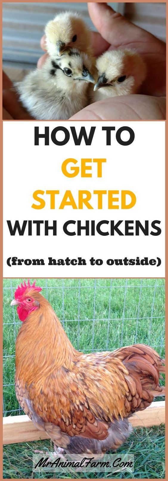 Getting started raising chickens can be overwhelming, but it doesn't have to be!  Learn all about raising chickens from hatching to taking them outside.