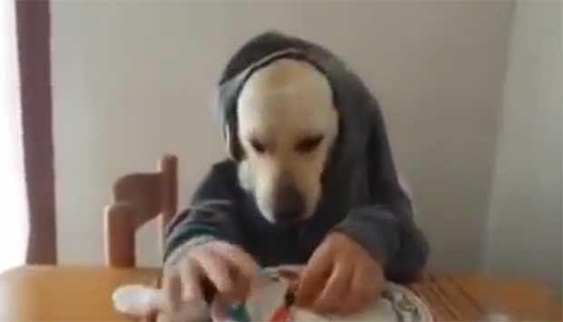 Σκύλος τρώει σαν άνθρωπος! (ΔΕΣ ΤΟ video) http://bit.ly/1g4RipU