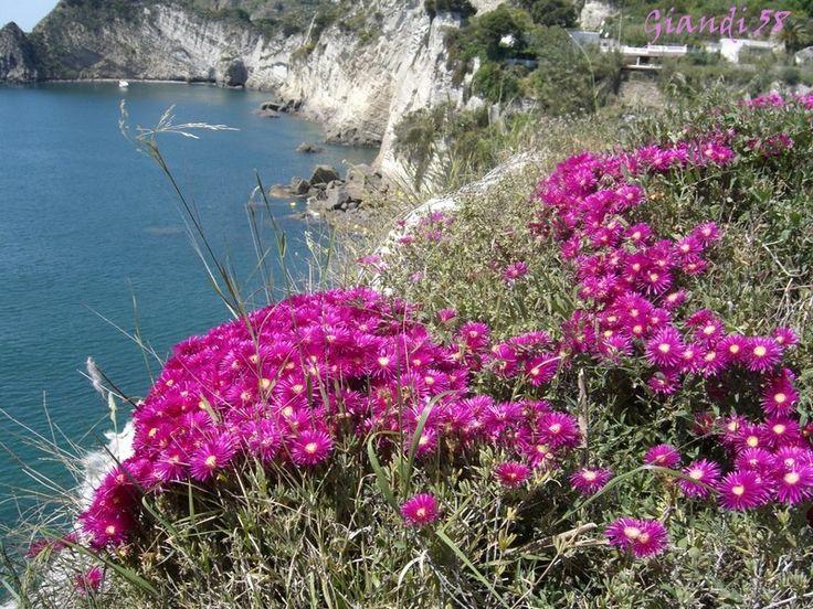 fiori che crescono in riva al mare - Cerca con Google