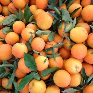 Oranges on Fetiye market