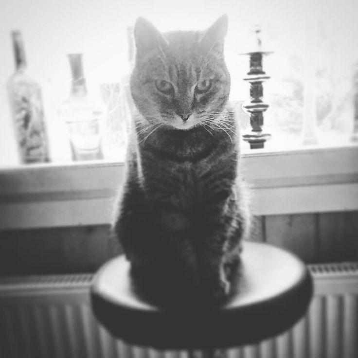 ...sitting like a boss!!! 😺🐾  .  .  #photo #cats #kitty #猫 #katzen #petcat #katter #instacool #pets #coolcat #cutest #catstuff #oops #instacats #sun #catoftheday #catsofig #instastare #catsofinstagram #instalikes #cat #catseyes #meow #catlover #catsagram #kissa #likeaboss #mollycatfinland #cute #instalike
