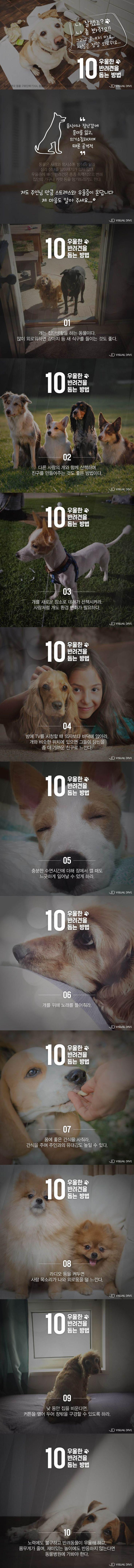 '멍무룩' 반려견, 우울증을 해소하는 방법은? [카드뉴스] #dog / #cardnews ⓒ 비주얼다이브 무단 복사·전재·재배포 금지