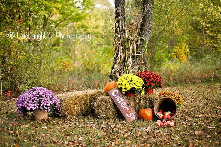 Sneak peak of the AWESOME fall mini session set up! Live Laugh Luv Photography. Fall Mini Session, Mums, flowers, leaves, corn stalks, pumpkins, advertisement.