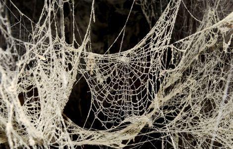 Qué significa soñar con una tela de araña