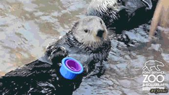 """""""It doesn't fit, idiot"""" - One of the best Otterlocks I've seen. (GIF)"""