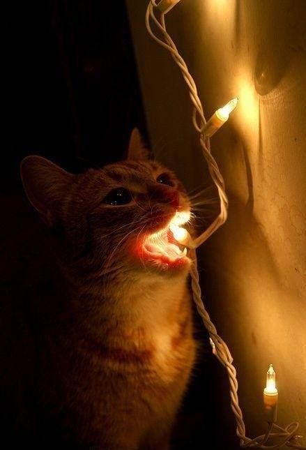 235 best Cats & Christmas images on Pinterest   Christmas animals ...