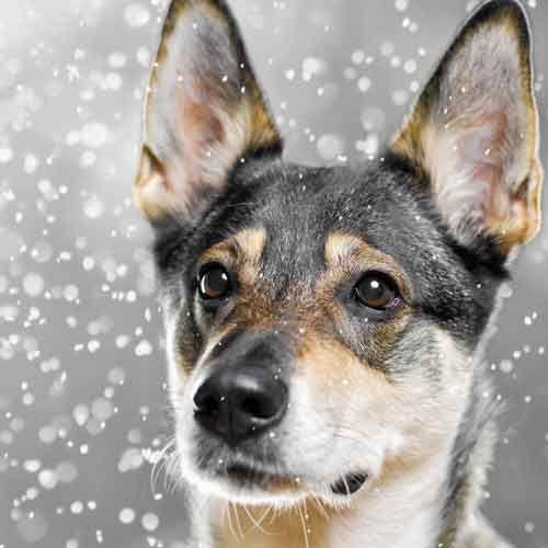 Σίγουρα θα έχετε δει τον σκύλος σας να ξύνει με τα πόδια του το έδαφος αφού έχει κάνει κακά του ή έχει ουρήσει. Φυσικά δεν το κάνουν όλα τα σκυλιά. Και στις δύο περιπτώσεις δεν υπάρχει λόγος ανησυχίας. Είναι μία σκυλίσια συμπεριφορά.