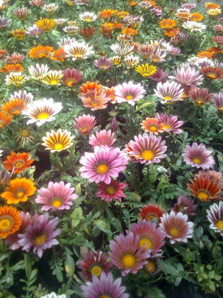 M s de 25 ideas incre bles sobre plantas ornamentales en for Produccion de plantas ornamentales