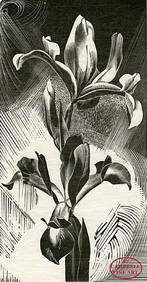 Gertrude Hermes 1901 - 1983: Spanish Iris 1926 Original wood engraving.