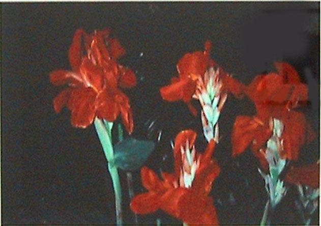 Nobuyoshi Araki  Red Flowers