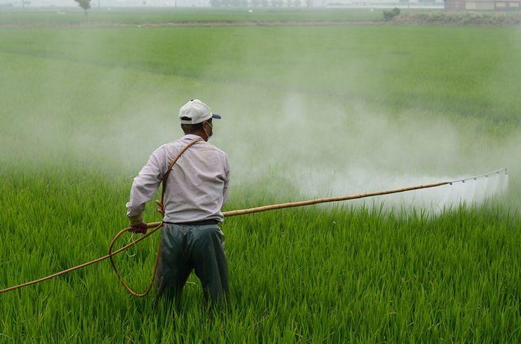 """¡El escándalo de Glifosato continúa! La Unión Europea permitirá seguir usando este peligroso herbicida por otros 5 años. A pesar de los potenciales efectos dañinos para la salud humana. La oposición de las organizaciones ecologistas y medioambientales han tachado de """"..."""