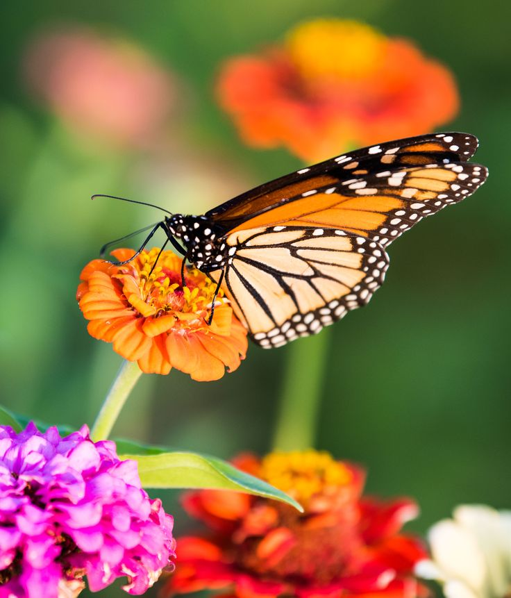 "Monarch, from the post, ""How to Talk to Each Other about Each Other"" 