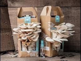 for more detail please visit http://fit-your-taste.blogspot.com/2016/04/mushroom-grow-kit.html