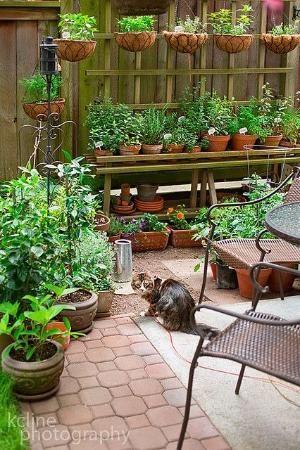 herb and veggie garden... | garden inspiration | Pinterest by guida