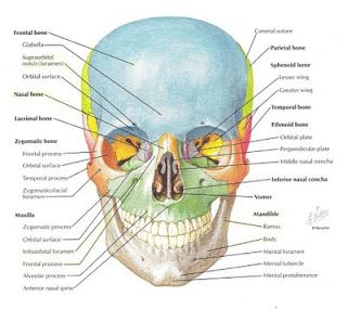Craniosacral Therapy relieves imbalances and misalignment of the skull bones and the vertebra, which restores optimal functioning and feelings of wellness in the body.