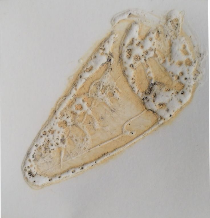 Etching on polycarbonate plate - Shellfish III By Márcia Santtos 2016 image size: 4,5 x 4,5 cm