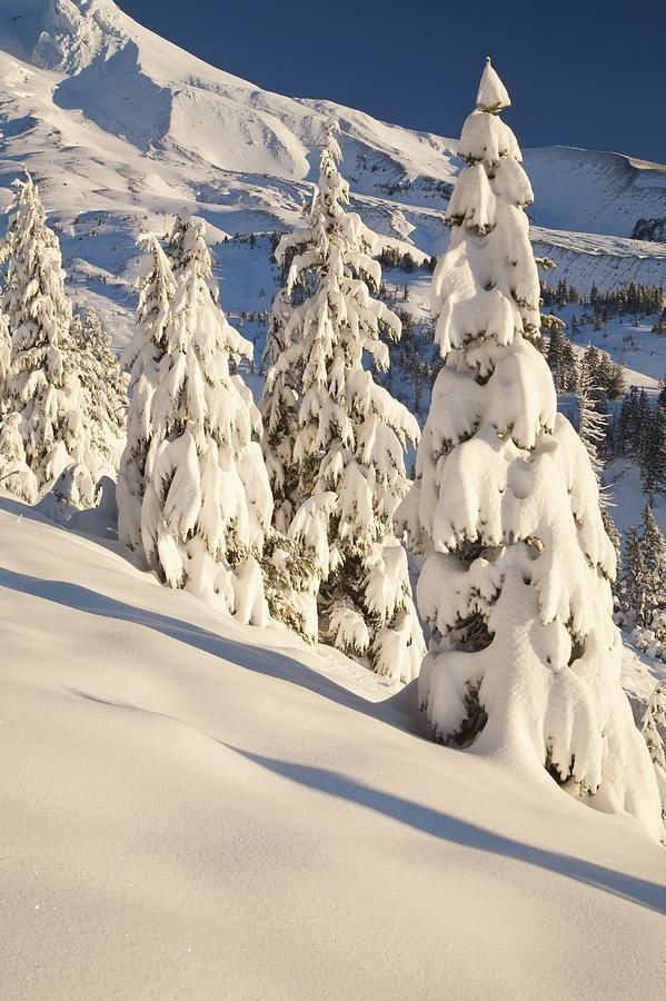 ✯ Oregon Snowfall