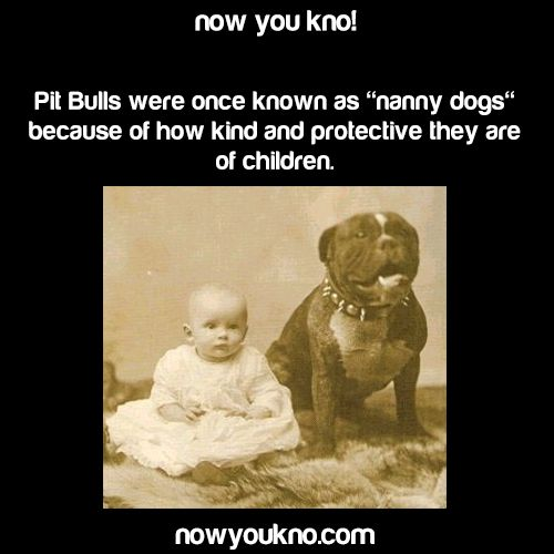 Because they're amazing dogs damn. Pit bulls rule