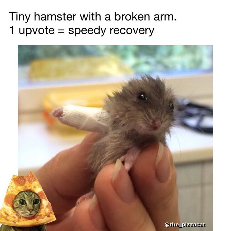 40 Funny Get Well Soon Memes To Cheer Up Your Dear One Sayingimages Com Funny Hamsters Funny Pictures For Kids Hamster