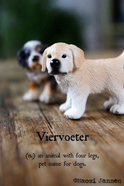Fine Art Photograpy animal dog loyal door theimperfectartistNL