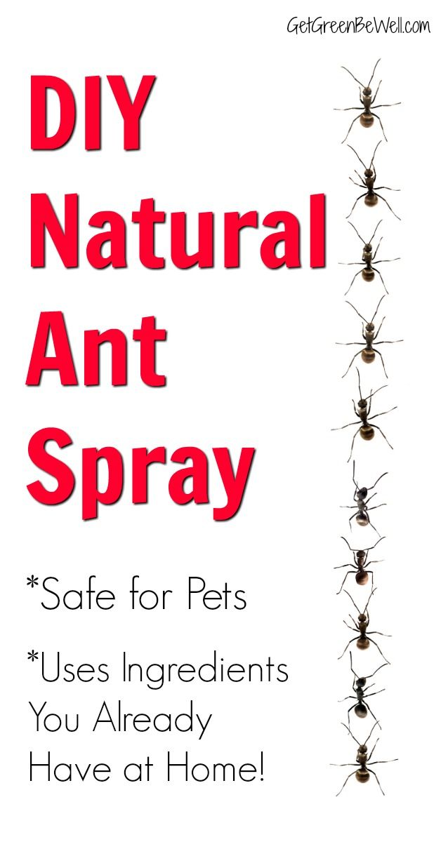 How To Get Rid Of Ants Safely Around Pets