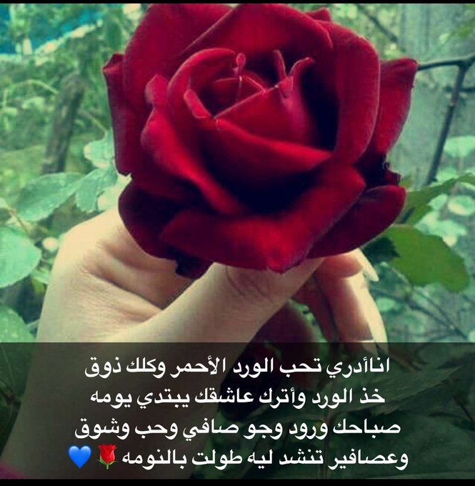 اناأدري تحب الورد الأحمر وكلك ذوق خذ الورد وأترك عاشقك يبتدي يومه صباحك ورود وجو صافي وحب وشوق وعصافير تنشد ليه طولت بالنومه Rose Plants Flowers