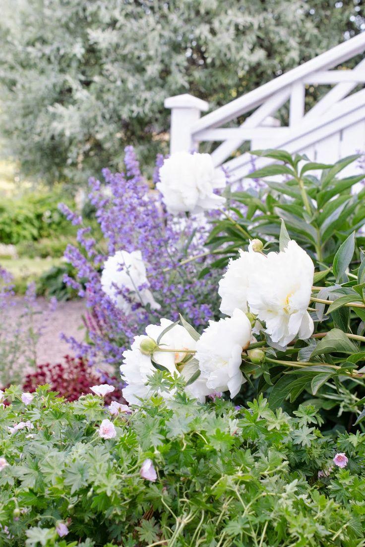 449 best plant combinations 2 images on pinterest | garden ideas