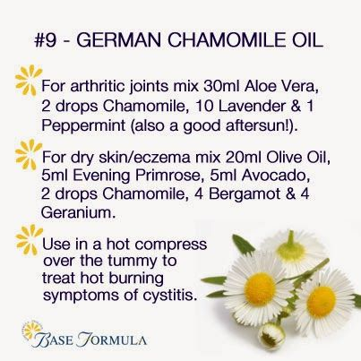 German Chamomile Essential Oil
