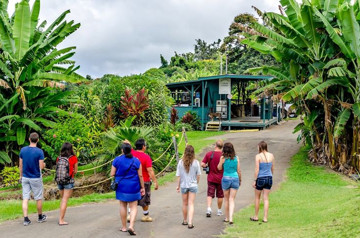 BIG LIST of Kona Coffee Tours and Tastings (Big Island